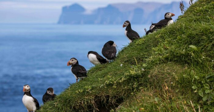 8-day-summer-package-top-island-attractions-mykines