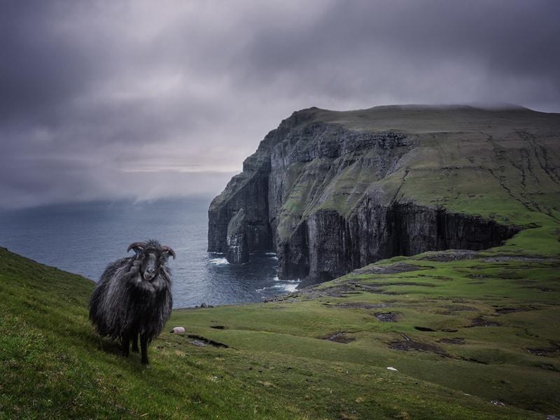 Asmundarstakkur and sheep