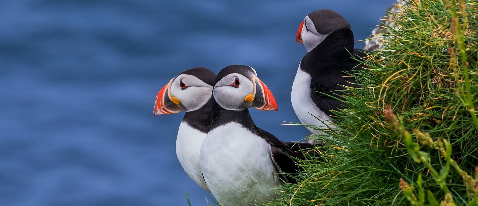 Puffin Guide to Faroe Islands