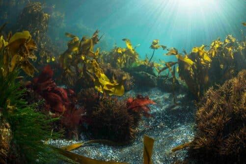 diving-faroe-islands