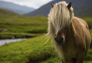 horseback-riding-faroe-islands